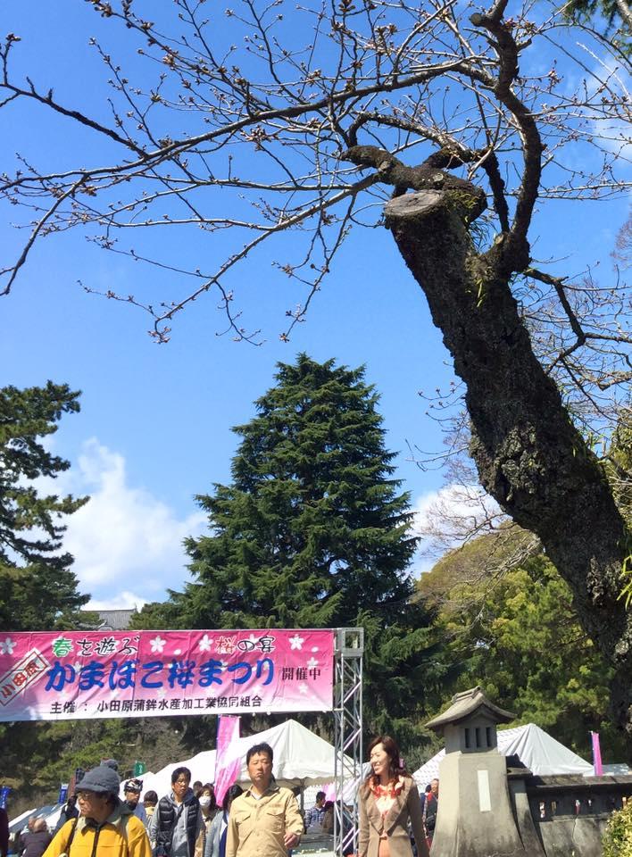 20160327-1かまぼこ祭り